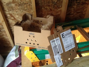 chicks-box